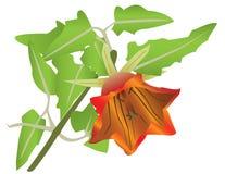 Bloeiende oranje bloem Royalty-vrije Illustratie