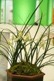 Bloeiende orchideeën Royalty-vrije Stock Foto