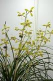 Bloeiende orchideeën Stock Foto