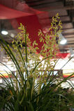 Bloeiende orchideeën Royalty-vrije Stock Fotografie