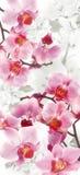 Bloeiende Orchideeën en Kersendecoratie Royalty-vrije Stock Afbeelding