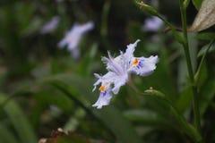 Bloeiende orchidee?n royalty-vrije stock foto's