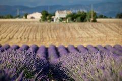 Bloeiende rijen van lavendel, de Provence, Frankrijk Stock Foto