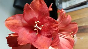 Bloeiende rode bloem royalty-vrije stock fotografie