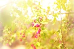 Bloeiende rode bloemen, vage bloemen en takken, vage scène stock afbeelding
