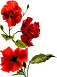 Bloeiende rode rozen Stock Foto's