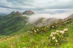 Bloeiende rododendron in de Kaukasus tegen het natuurreservaat Grote Thach ' Stock Foto