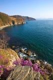 Bloeiende rododendron op de kusten van de Baai van Nakhodka royalty-vrije stock fotografie
