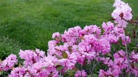Bloeiende roze bloemen Stock Afbeeldingen