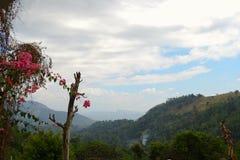 Bloeiende roze bloemen en bergen Royalty-vrije Stock Foto