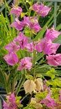 Bloeiende roze de zomerbloem royalty-vrije stock fotografie