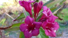 Bloeiende roze de zomerbloem royalty-vrije stock afbeelding