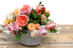 Bloeiende rozen in installatiepot Stock Foto's