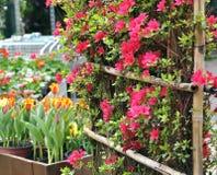Bloeiende struik met rode bloemen, tulpen Royalty-vrije Stock Foto's