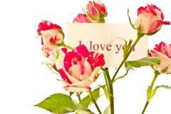 Bloeiende struik van rode rozen Stock Afbeelding