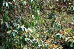 Bloeiende struiken in de wildernis stock afbeelding