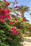 Bloeiende struiken van de rododendron en de palmen stock afbeeldingen