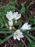 Bloeiende tak met witte bloemen in de lente stock afbeeldingen