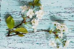 Bloeiende tak op document textuur Japanse stijl van wabisabi De uitnodiging van het huwelijk royalty-vrije stock foto's