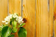 Bloeiende tak van appel op houten raad Royalty-vrije Stock Afbeeldingen