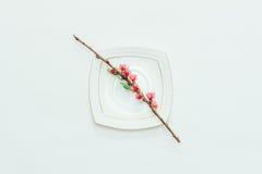 Bloeiende tak van een perzik met roze bloemen op een witte schotel op een wit close-up als achtergrond Royalty-vrije Stock Foto