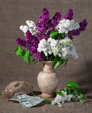 Bloeiende takken van sering in vaas en dollars Stock Afbeeldingen