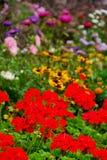 Bloeiende tuin stock foto's
