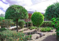 Bloeiende tuin van topiary stock foto's