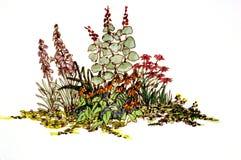 Bloeiende tuincluster Royalty-vrije Stock Afbeelding