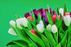Bloeiende tulpenbloemen Royalty-vrije Stock Foto