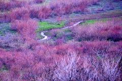 Bloeiende violette bomen in vallei toneellandschap Stock Foto