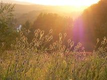Bloeiende weide bij zonsondergang Royalty-vrije Stock Afbeeldingen