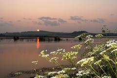 Bloeiende weidegrassen door de rivier op de zomer het plaatsen zon backg Royalty-vrije Stock Afbeeldingen