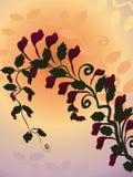 Bloeiende wijnstokachtergrond stock fotografie
