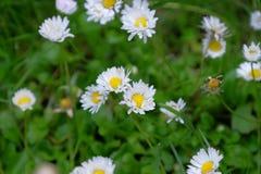 Bloeiende wilde bloemen Stock Foto's