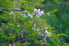 Bloeiende wilde bloemen Stock Fotografie