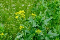 Bloeiende wilde bloemen op een groen gras royalty-vrije stock foto