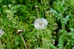 Bloeiende wilde bloemen op een groen gras stock afbeelding