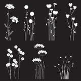 Bloeiende wilde die bloemen op een zwarte achtergrond worden gescheiden Royalty-vrije Stock Afbeeldingen