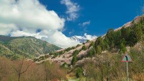 Bloeiende wilde fruitbomen in de bergenlente in timelapse 4K stock footage