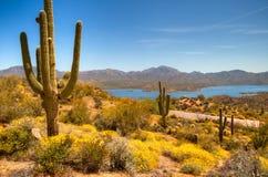 Bloeiende woestijn stock afbeeldingen