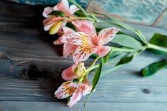 Bloeit de roze bloemen van Alstroemeria met bevlekte bloemblaadjes op een houten achtergrond met een zeer interessante textuur Royalty-vrije Stock Afbeelding