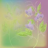 Bloeit kobe op groene en lilac achtergrond Royalty-vrije Stock Afbeelding