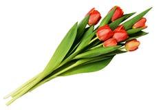Bloeit rode tulp zeven boeket Royalty-vrije Stock Afbeeldingen