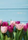 Bloeit tulpen als achtergrond, Violette en roze op blauw hout, exemplaarruimte Royalty-vrije Stock Foto's