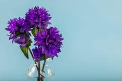 Bloeit violette kleur in een vaas op een blauwe achtergrond met ruimte voor tekst stock afbeeldingen