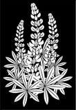 Bloeiwijze van lupines Royalty-vrije Stock Afbeeldingen