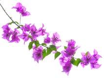 bloem Royalty-vrije Stock Fotografie