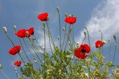 bloem Stock Foto's