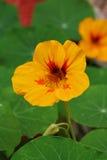 bloem stock afbeeldingen